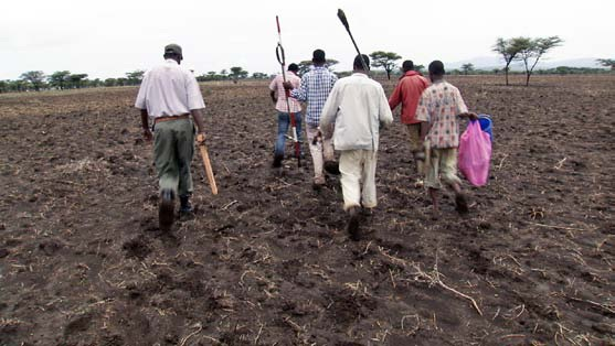 EthioSIS has trained soil surveyors to use AfSIS survey methods, and the surveyors have visited sample sites around the country. Photo credit: Agriculture Transformation Agency, Ethiopia
