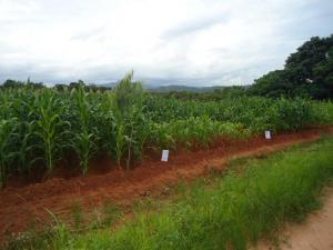 Diagnostic field trials in Nkhata Bay, Malawi, February 2012