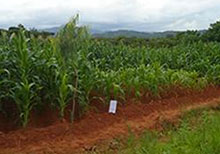 Africa Crops